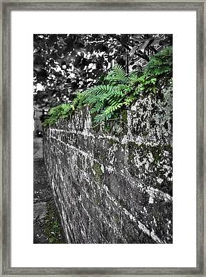 Ferns On Old Brick Wall Framed Print