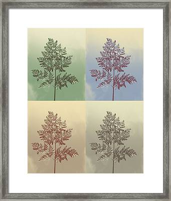 Ferns Times Four Framed Print by Andrea Dale