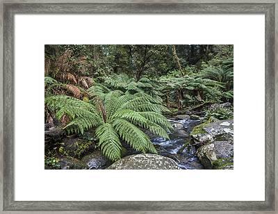 Ferntree Gully Framed Print
