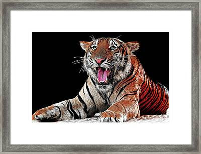 Ferocious Tiger Framed Print by Daniel Hagerman