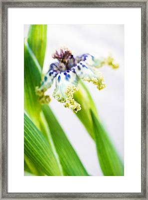 Ferraria Crispa Framed Print by Priya Ghose