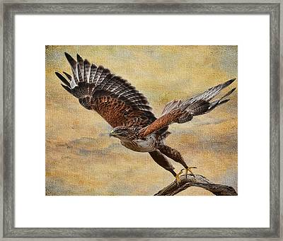 Ferruginous Hawk Framed Print by Russell Dudzienski