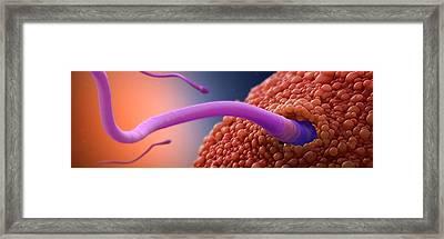 Fertilisation Framed Print