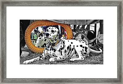 Festival Dog Framed Print