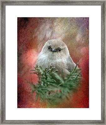 Festive Bushtit Framed Print