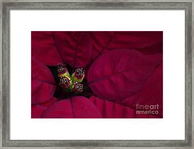 Festive Red Framed Print by Jacky Parker