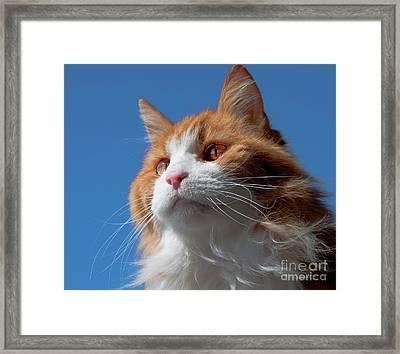 Festus... Framed Print