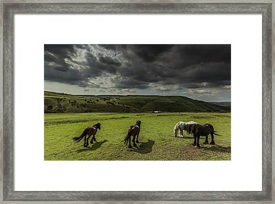 Fetlocked Friends Framed Print
