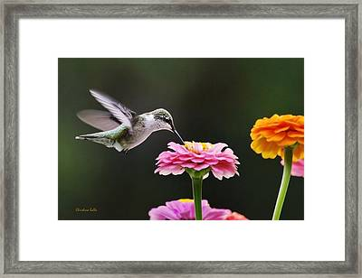 Few And Far Between Framed Print by Christina Rollo