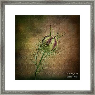 Fey Poppy Magic Framed Print by Terry Rowe