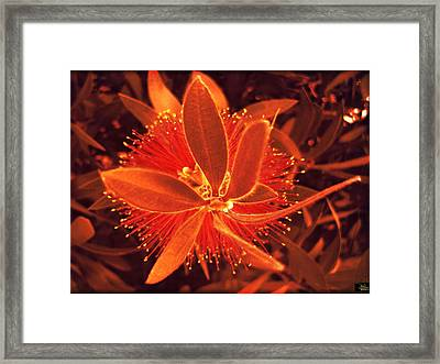 Fiber Optic Flower Framed Print