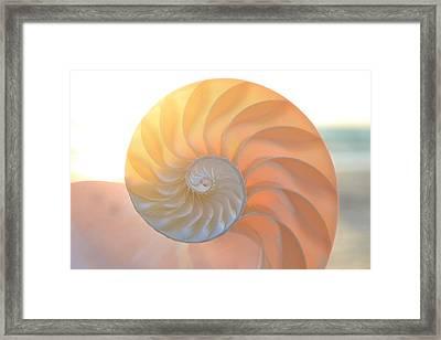 Fibonacci Framed Print by Melanie Moraga