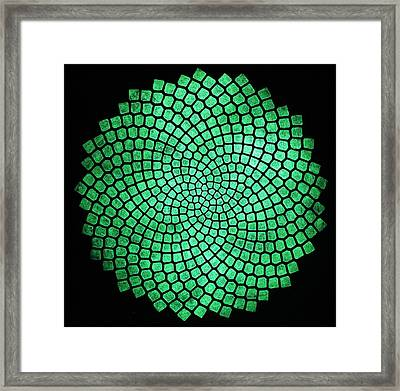 Fibonacci Sunflower Framed Print by Twilight Vision