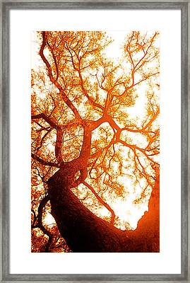 Fibonacci Tree Framed Print by J- J- Espinoza