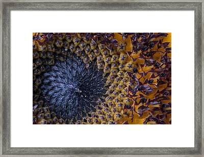 Fibonacci's Sunrise Framed Print