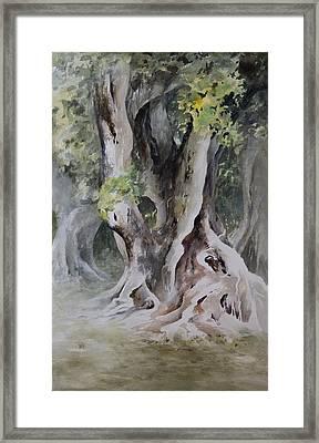 Ficus Aurea Framed Print by Rachel Christine Nowicki