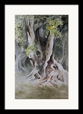 Ficus Aurea Framed Prints