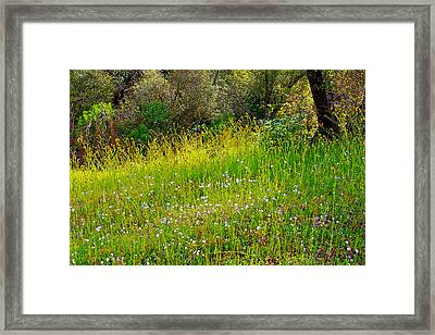 Fiddleneck And Popcorn Flowers In Park Sierra Near Coarsegold-california Framed Print by Ruth Hager