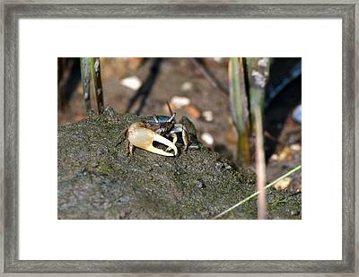Fiddler On The Marsh Framed Print