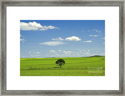 Field And Sky Framed Print by Charline Xia