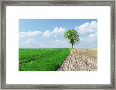 Field And Tree Framed Print by Wladimir Bulgar