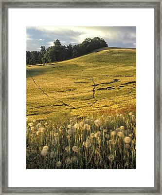 Field And Weeds Framed Print by Latah Trail Foundation