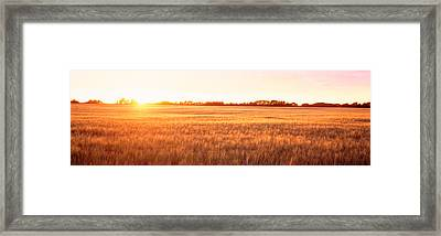 Field Canada Framed Print by Panoramic Images