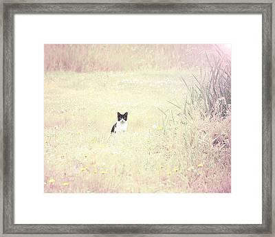Field Cat Framed Print by Kellie Prowse