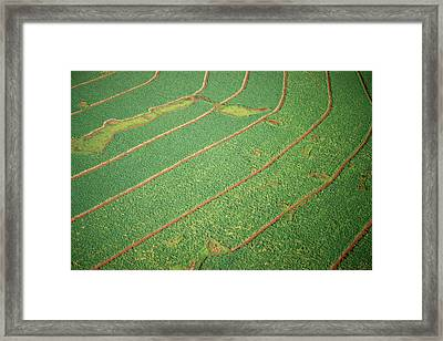 Field Divided Into Rows Framed Print by Panoramic Images