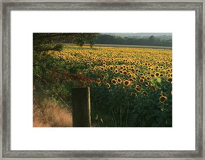 Field Dreams No.2 Framed Print by Neal Eslinger