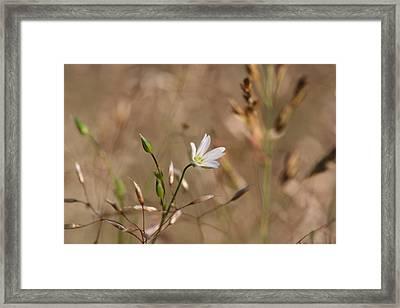 Field Flowers Framed Print by Dreamland Media