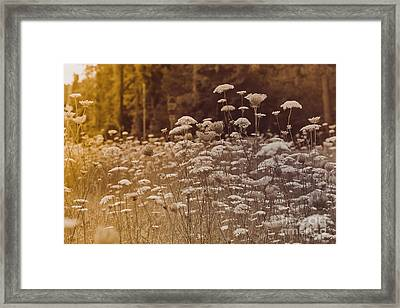 Field For The Queen Framed Print