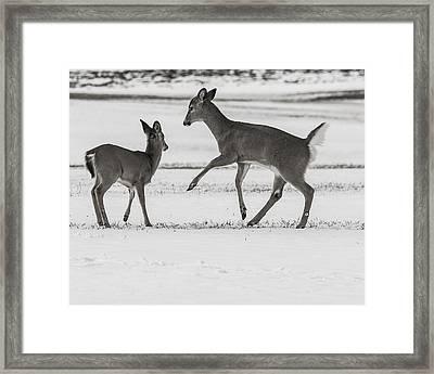 Field Frolic Framed Print
