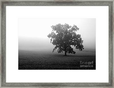 Field In Cades Cove Framed Print
