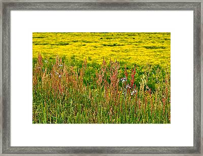 Field In Spring Framed Print by Beverly Hammond