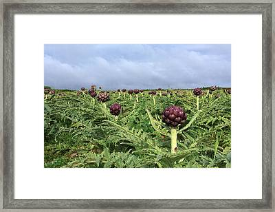 Field Of Artichokes Framed Print