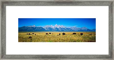 Field Of Bison With Mountains Framed Print by Panoramic Images