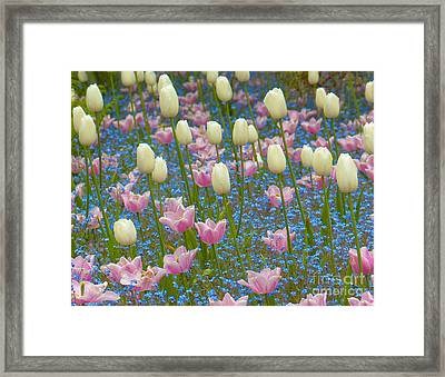 Field Of Blooms Framed Print by Sarah Crites