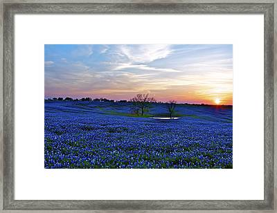 Field Of Blue Framed Print by John Babis