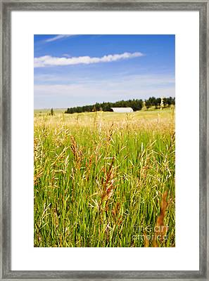 Framed Print featuring the photograph Field Of Brome Grass With Barn by Lincoln Rogers