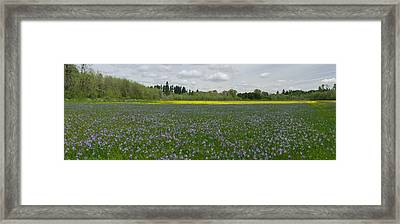 Field Of Camas And Western Buttercup Framed Print by John Higby