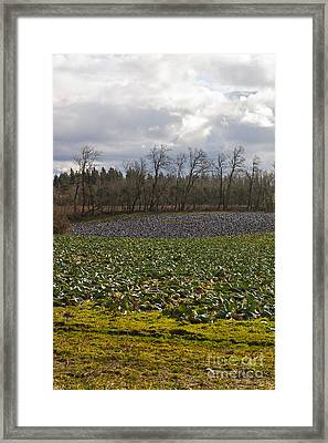Field Of Color 2 Framed Print by Belinda Greb