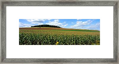 Field Of Corn With Tractor In Distance Framed Print by Panoramic Images
