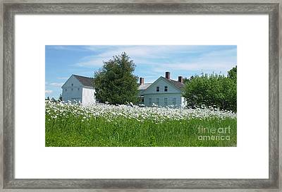 Field Of Daisies 2 Framed Print by Christopher Mace