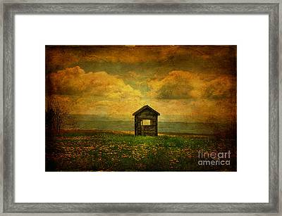 Field Of Dandelions Framed Print