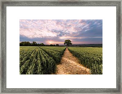 Field Of Dreams Framed Print by Ian Hufton