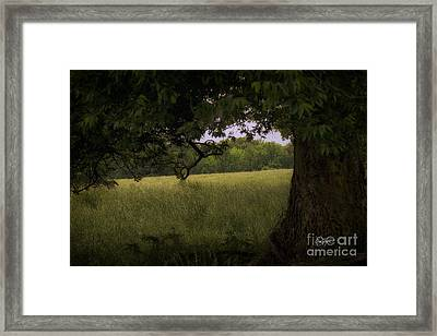 Field Of Dreams II Framed Print by Cris Hayes