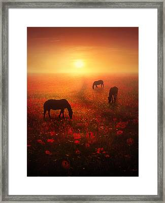 Field Of Dreams Framed Print by Jennifer Woodward