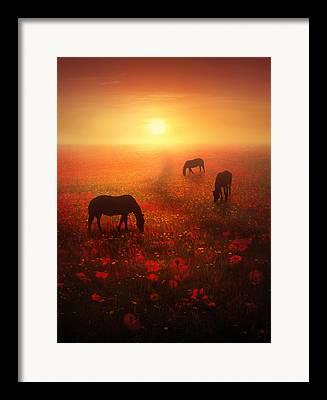 Horse Images Digital Art Framed Prints