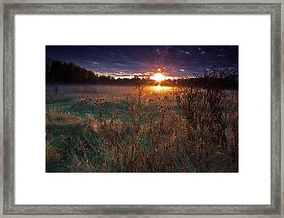 Field Of Dreams Framed Print by Suzanne Stout